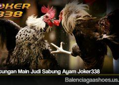 Keuntungan Main Judi Sabung Ayam Joker338