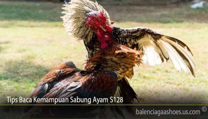 Tips Baca Kemampuan Sabung Ayam S128