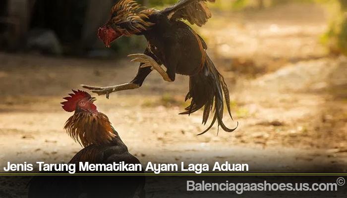 Jenis Tarung Mematikan Ayam Laga Aduan
