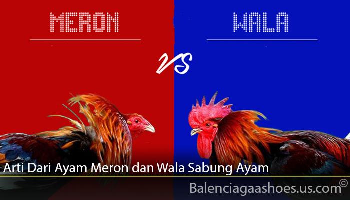 Arti Dari Ayam Meron dan Wala Sabung Ayam